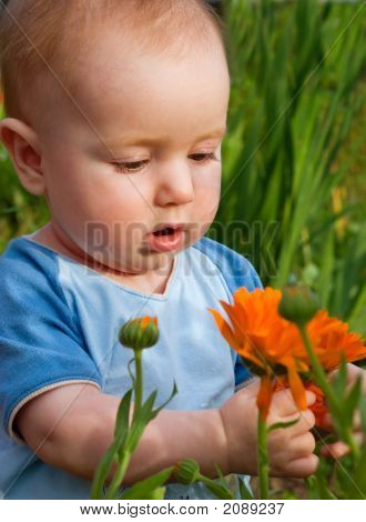 Tot Looks At Flower