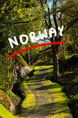 Pathway Landscape In Norwegian Mountains poster