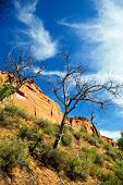 foto of cottonwood  - A dead cottonwood tree on the bank of a desert stream - JPG