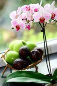 Постер, плакат: Орхидея корзина яблоки и сливы окно выступ