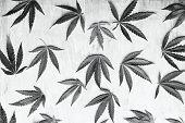 Black And White Horizontal Photos Of Marijuana Leaves On A Deverted Background, High Quality Marijua poster