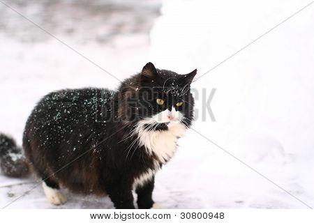 Ernst groß und mächtig schwarze Katze