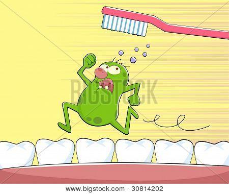 germe do dente