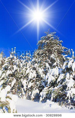 Eterno congelada en invierno