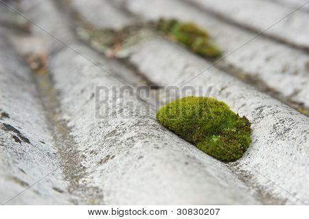 Moss en un techo