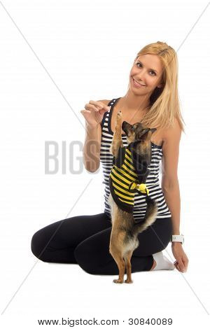Woman Play Or Trained Her Small Chihuahua Dog