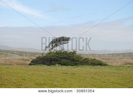 The lone tree!