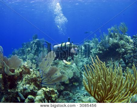 Scuba Diver Swimming Through A Cayman Island Reef