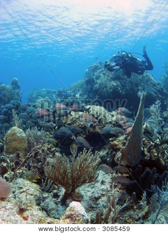 Underwater Photographer Shooting A School Of Grunts
