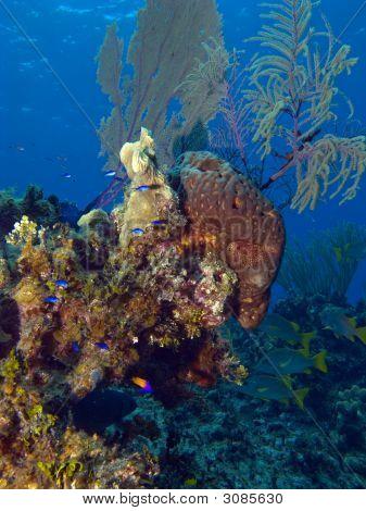 Colorful Cayman Brac Reef Scene