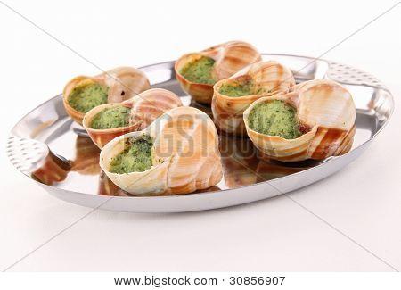 isolated bourgogne snail