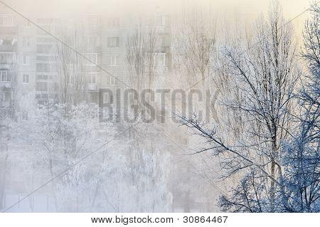 Hazy Winter Morning