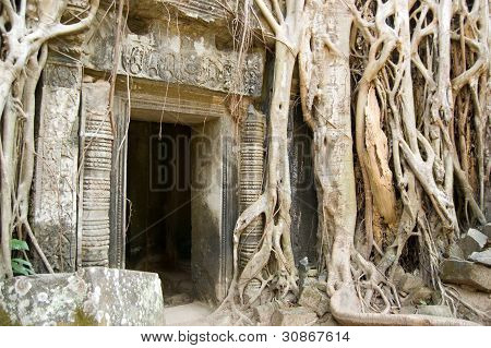 Ta Prohm Temple and jungle