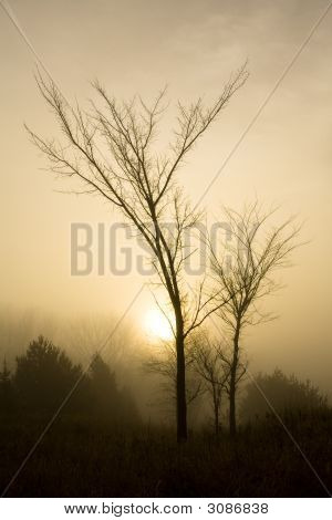 Morning Fog And Trees