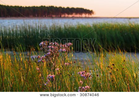 Sunset At Seaside With Flowers