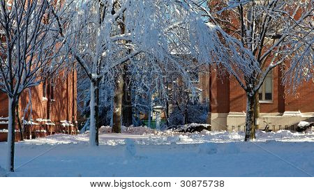 Red Brick Dorm Buildings At Harvard University In Winter