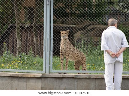 Gepard And Man