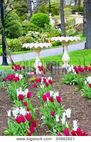 Birdbaths and tulips in a Halifax, Nova Scotia park.
