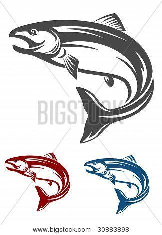 Lachs Fisch