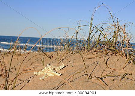 Starfish On Sand Dune