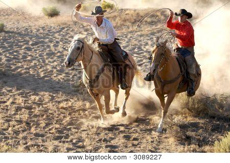 Wild Cowboys