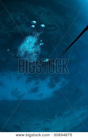 Diver on line