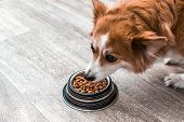 Portrait Of A Dog With A Bowl Of Dry Food. Eats Close Up. Dog Diet Concept poster