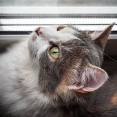 Portrait Of A Young Cat Curiously Looking Up At The Window Through The Blinds poster