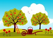 stock photo of hand-barrow  - vector hand barrow with basket of apples in apple tree orchard - JPG