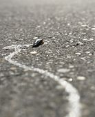 Dried Up Slug On A Street