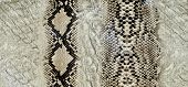 picture of unnatural  - Snake skin reptile texture background - JPG