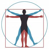 Vitruvian Man. Leonardo Da Vinci Human Body Perfect Anatomy Proportions In Circle And Square. Vector poster