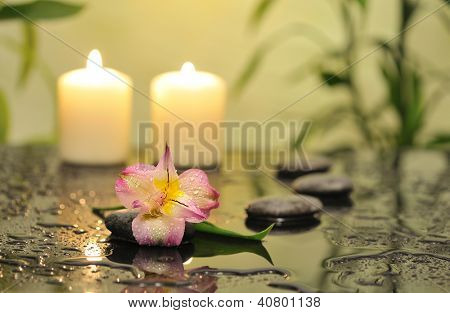 spa still life with pink orchid flower and white burn candles on green background