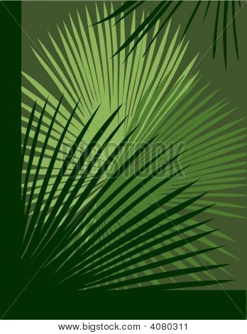Palm Abstract Background