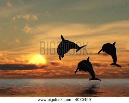 Dolphin And Sunset