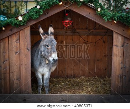 Donkey in a Christmas Stable