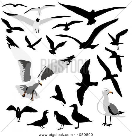 Seagull Group