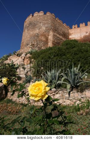 Yellow Rose In Almeria