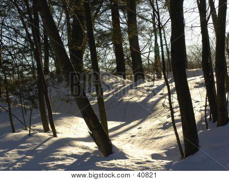 Sunlit Snowbank