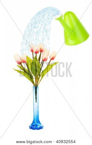 Topf mit Tulpen, isolated on white