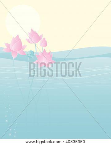 Lotus In Water