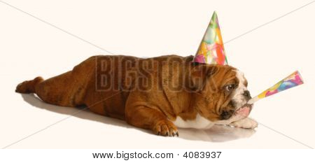 Bulldog With Birthday Hat