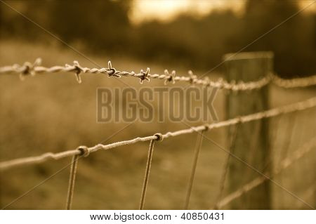 Frosted Barb Wire Fence