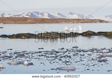 Berge über der Arktis Fjord