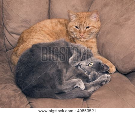 Two cat pals on a couch