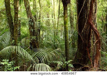Ferns and trees in tropical jungle rain forest