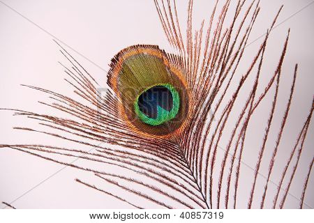 Eye Of Peacock Feather Isolated