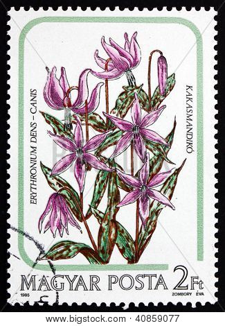 Postage stamp Hungary 1985 Dogtooth Violet, Flower
