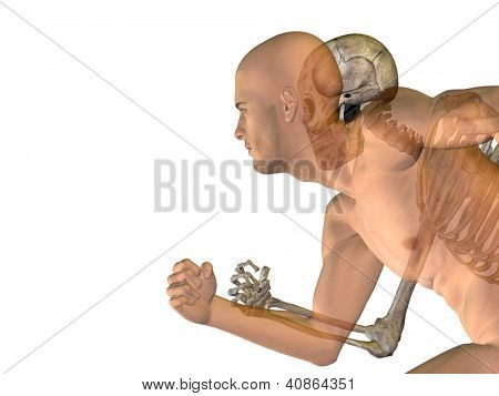 Human or male 3D anatomy with bones or skeleton and face or skull details isolated on white