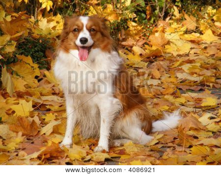 Dog In The Leaves